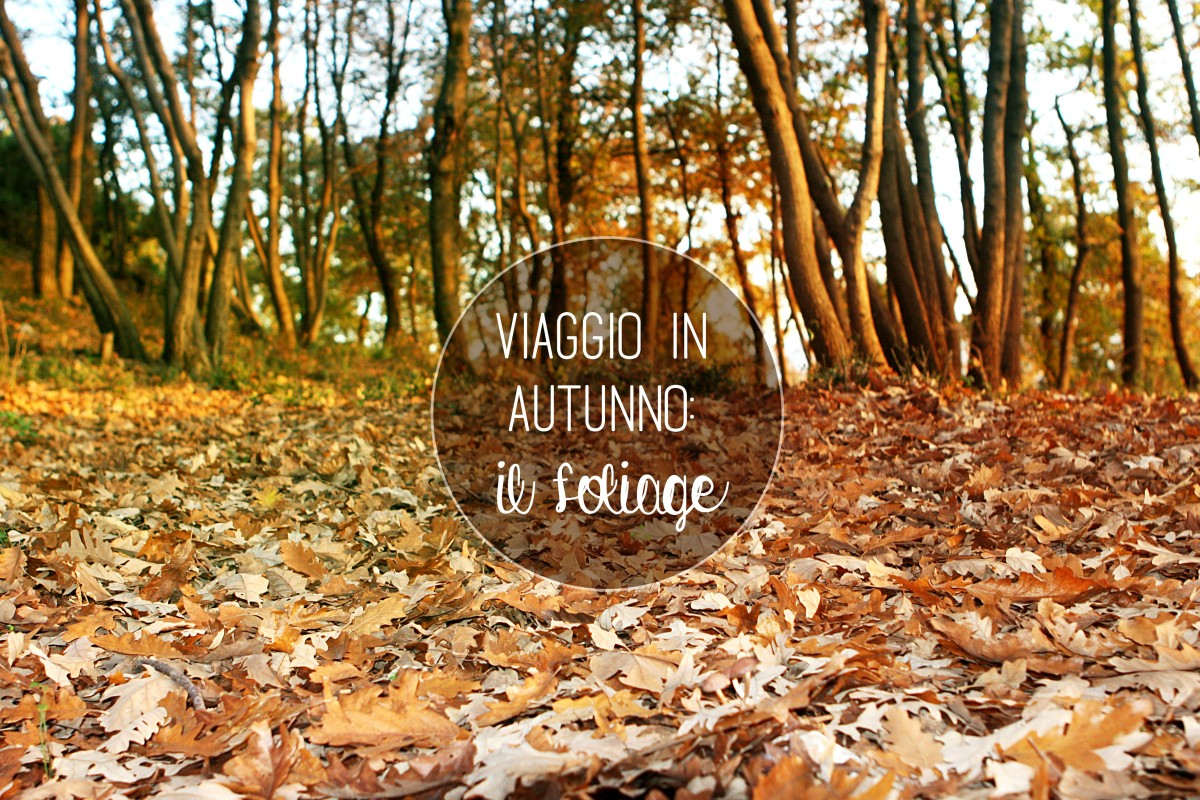 Viaggio in Autunno: il Foliage